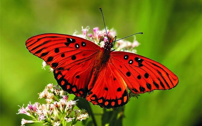 de-que-forma-c3a9-que-as-asas-das-borboletas-refutam-a-teoria-da-evoluc3a7c3a3o5