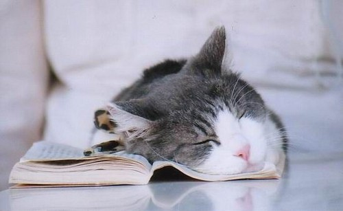 Sleep Cat With book