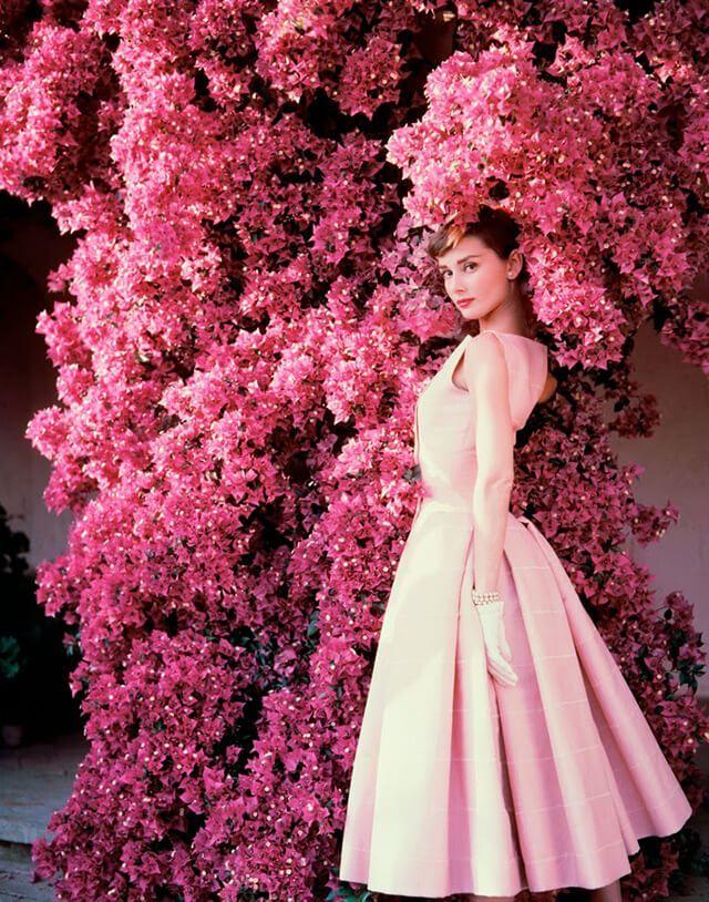 audrey_pink_bushes